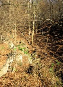 Uno scorcio del bosco